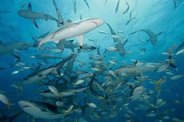 Sharks Sharks