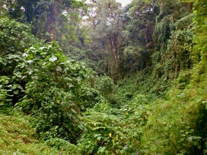 The Costa Rican Rainforest
