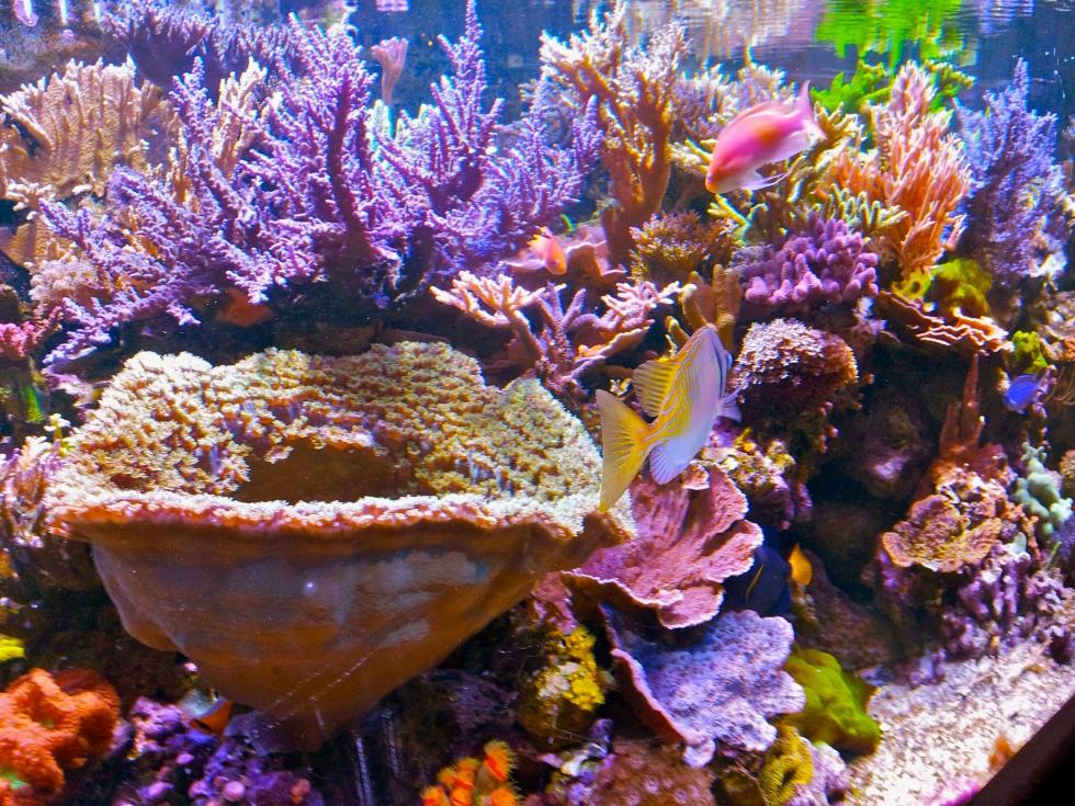 Coral at the Minnesota Zoo, kvogel2013