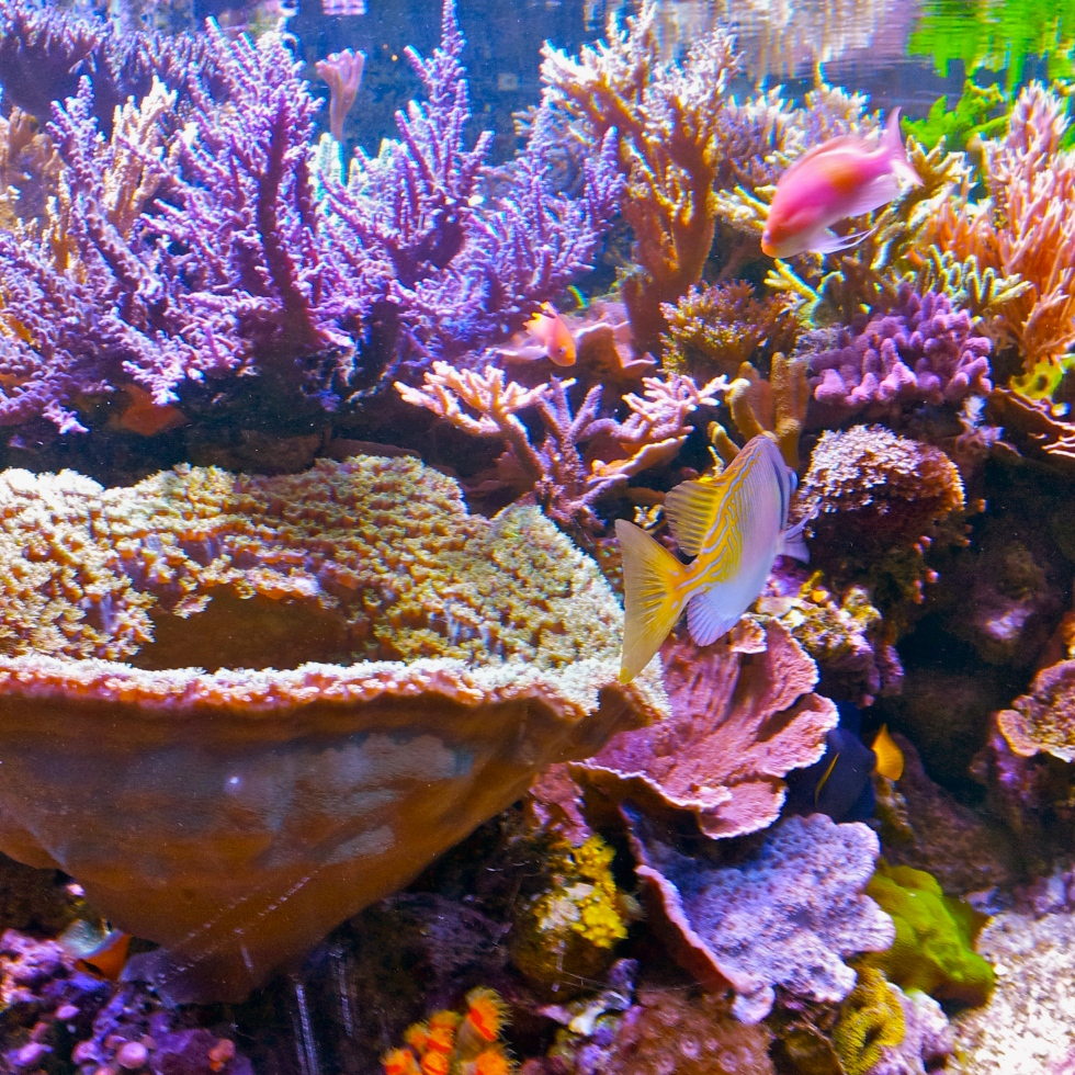 Coral at the Minnesota Zoo, kvogel2013