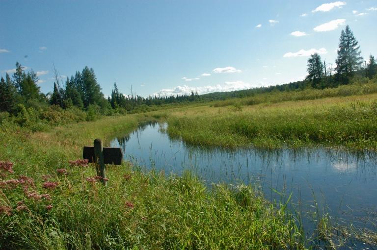Prairie Grass, Mississippi River, copyright Kvogel